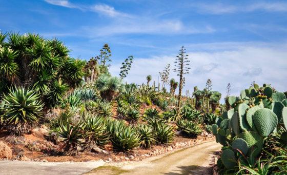 Botanicactus - Botanischer Garten