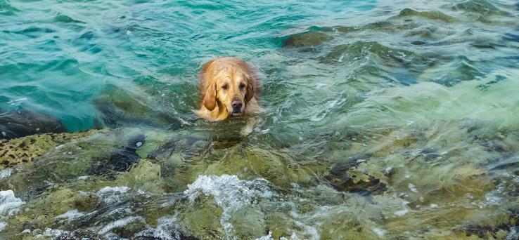 Hund schwimmt im Meer