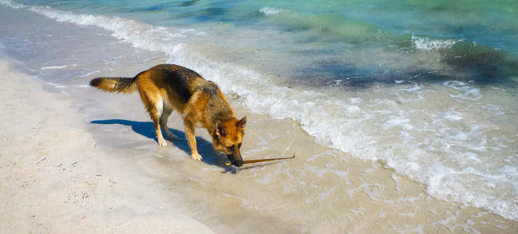 Hund spielt am Strand