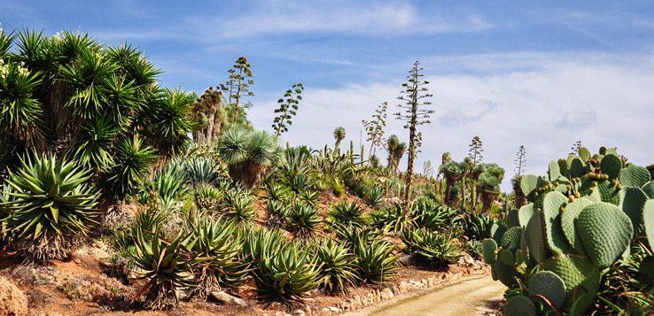 Kakteen im Botanicactus
