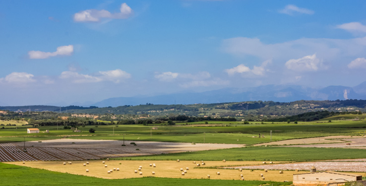Felder und Äcker auf Mallorca