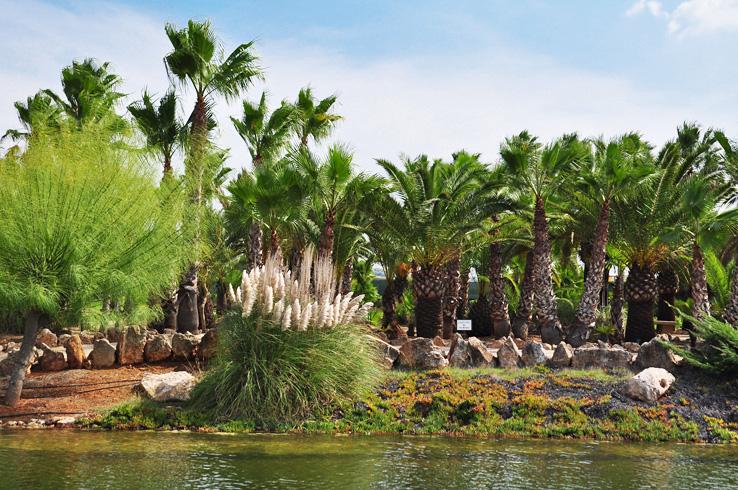 See im Botanicactus
